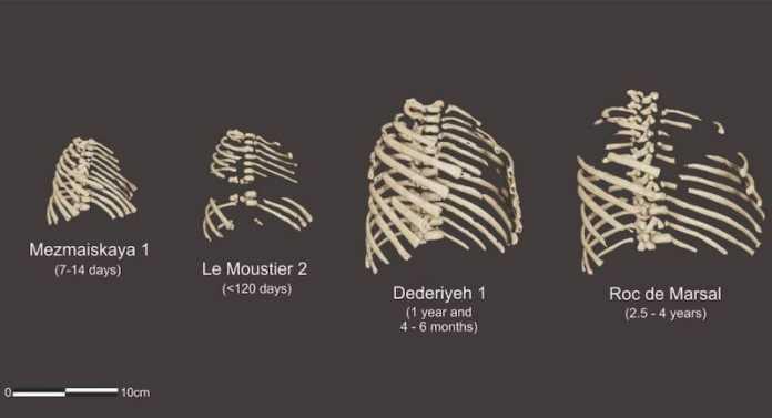 reconstruccion torax neandertal