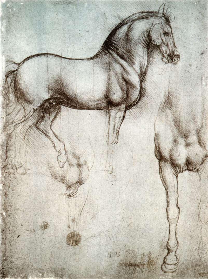 estudio caballo leonardo da vinci