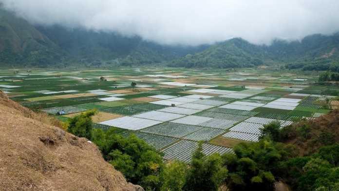 campos arroz mas antiguos del mundo