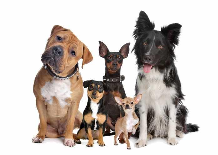 perros domesticados prehistoria