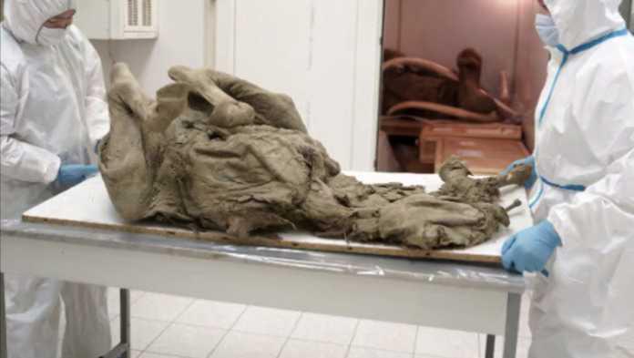 estudio virus mamut