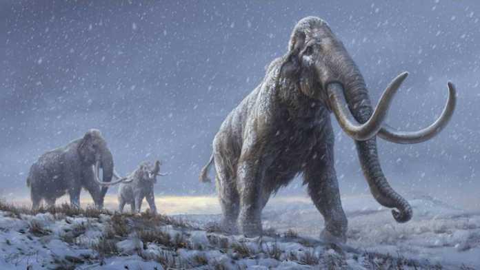 nuevo linaje de mamut