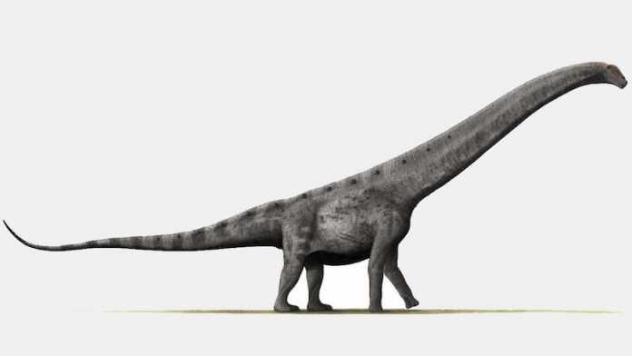 descubren mayor titanosaurio argentina