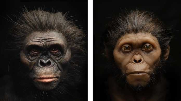reconstrucciones faciales lucy y niño taung