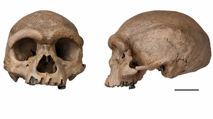 nueva especie hominido homo longi