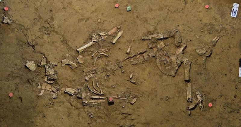 enterramiento alemania neolitico tardio