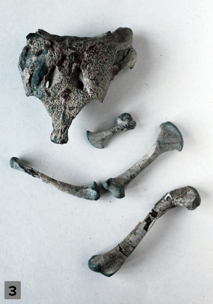 huesos cocodrilo