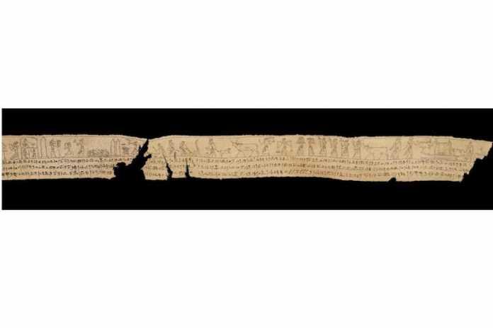 fragmento vendaje lino momia egipto