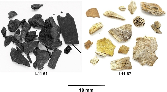 fragmentos de huesos quemados prehistoria