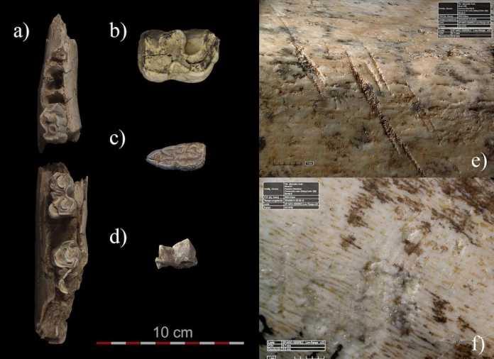 supervivencia neandertal españa